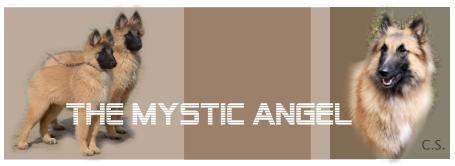 Banner Angelique 3